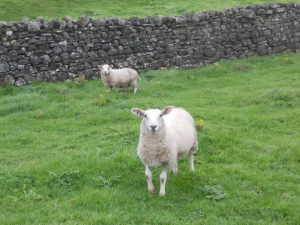 Two sheep beside a stone wall.