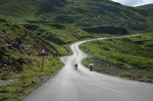 A winding highland road with two sheep walking down the center.