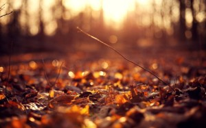 autumn leaves on the ground at sunset