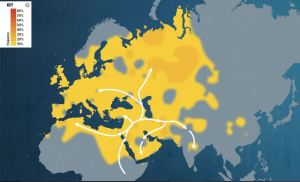 Heat Map for Maternal Line Haplogroup T1